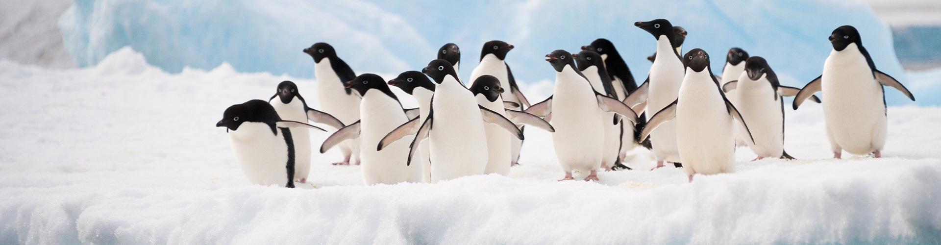 Diverse Pinguine auf einer Eisscholle